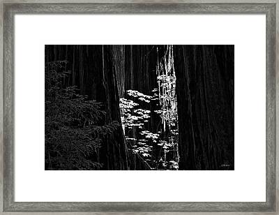 Redwoods Light And Texture Framed Print by Leland D Howard
