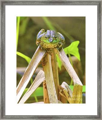 Reeds Bully Framed Print