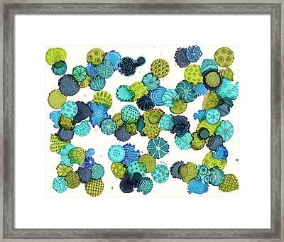 Reef Encounter #5 Framed Print