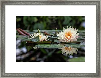 Delicate Reflections Framed Print