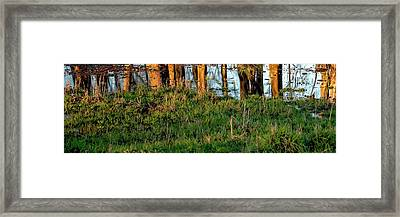 Framed Print featuring the photograph Reflected Sunrise Trees by Jerry Sodorff