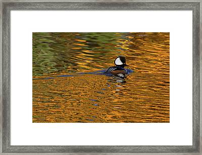Reflecting With Hooded Merganser Framed Print
