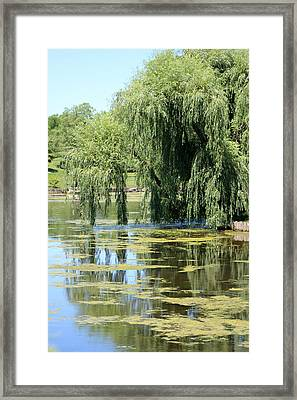 Reflections From Mother Willow Framed Print