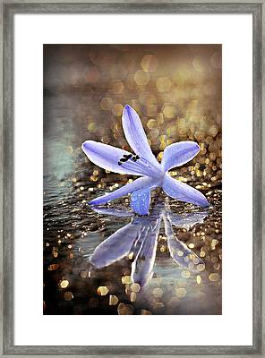 Framed Print featuring the photograph Reflections Of Joy by Michelle Wermuth