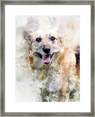 Remember The Four-legged Smile Framed Print