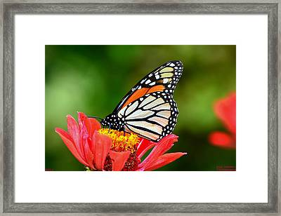 Remembrance Sweet Angel Boy  Framed Print