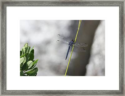 Framed Print featuring the photograph Rest Stop by Kirkodd Photography Of New England
