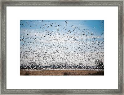 Resting On The Flyway Framed Print