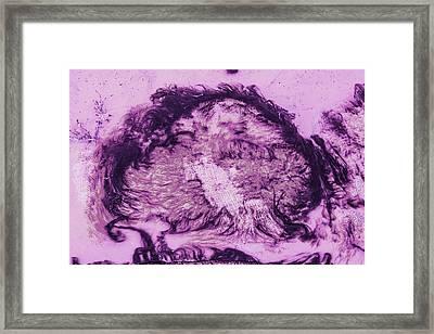 Rhapsody In Purple Framed Print