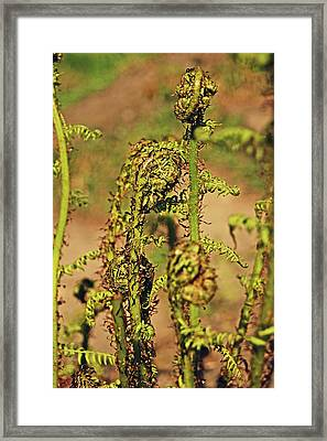 Rivington Terraced Gardens. Fern Frond. Framed Print