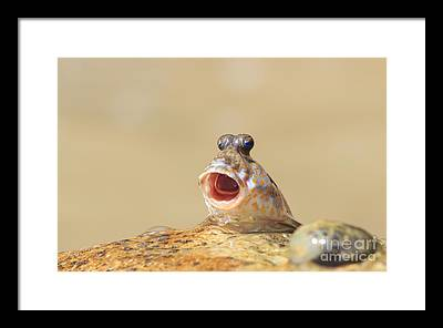 Goby Framed Prints