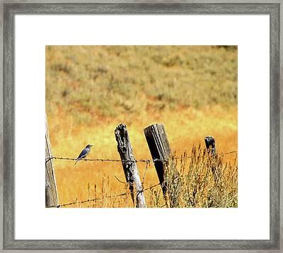 Rocky Mountain Blue Bird Framed Print