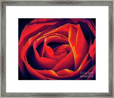 Rose Ablaze Framed Print