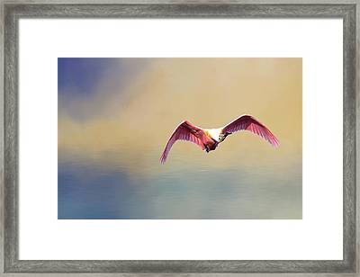 Roseate Spoonbill At Sunrise Framed Print