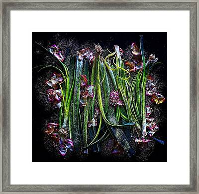 Rosy Leeks Framed Print