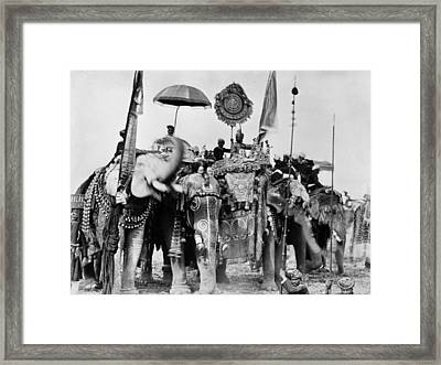Royal Elephants Framed Print by Hulton Archive
