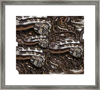 S Is For Snakes Framed Print