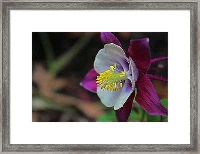 Saffron Stamens I Framed Print