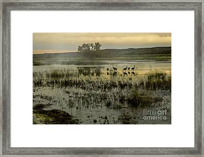 Sandhill Serenity Framed Print