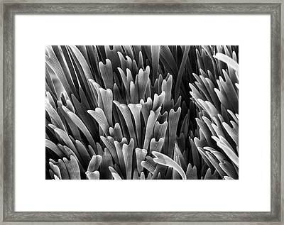 Scales Around Genitalia Framed Print