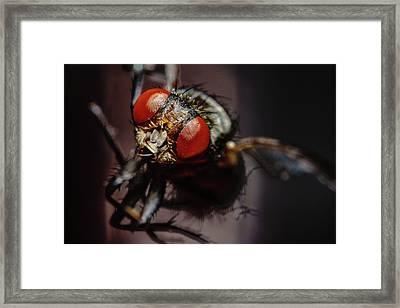 Scavenger Close-up Framed Print