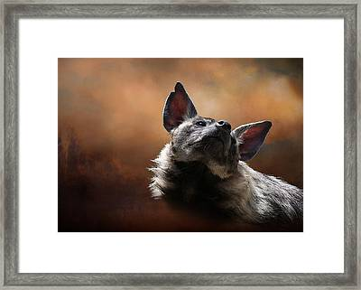 Framed Print featuring the photograph Scenting The Air - Striped Hyena by Debi Dalio