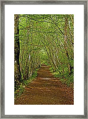 Scotland. Killiecrankie. Path Through The Trees. Framed Print