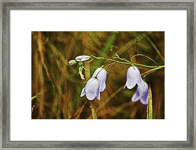 Scotland. Loch Rannoch. Harebells In The Grass. Framed Print