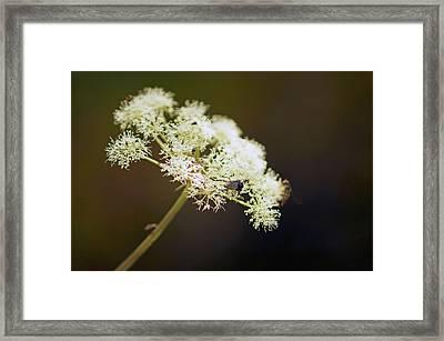 Scotland. Loch Rannoch. White Flowerhead. Framed Print
