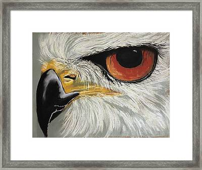 Scouting Framed Print