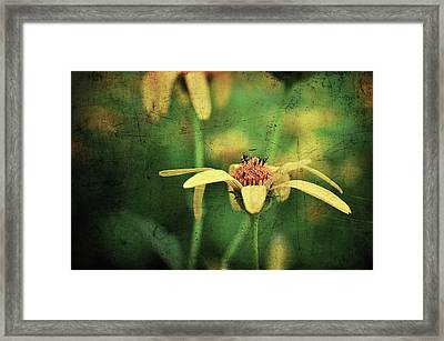 Framed Print featuring the photograph Scratched by Michelle Wermuth