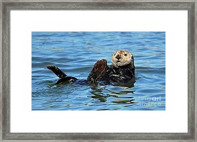Sea Otter Primping Framed Print