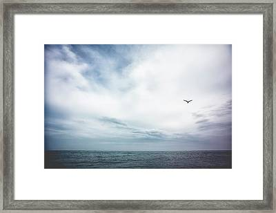 Seagull Flying Over Lake Michigan Framed Print by Rebecca Nelson