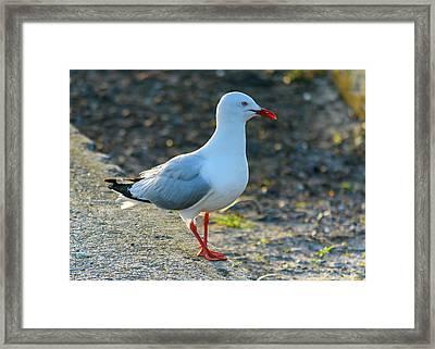 Seagull On The Breakwall Framed Print