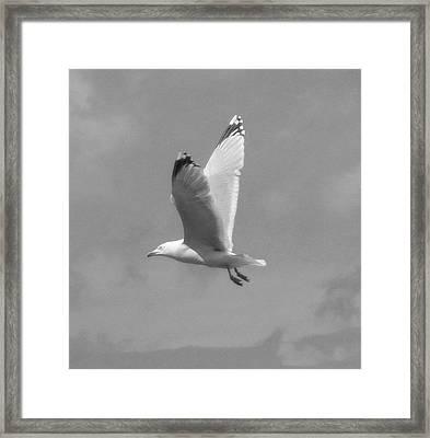 Seagull Over Llandudno Framed Print