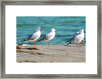 Framed Print featuring the photograph Seagulls On The Beach. by Rob D
