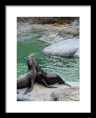 Seal Rock Framed Prints