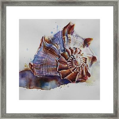 Seashell Swirl Framed Print