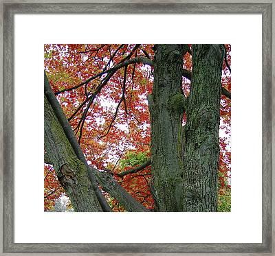 Seeing Autumn Framed Print