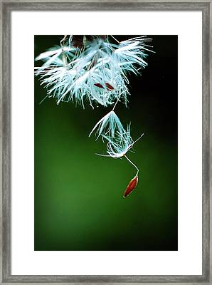 Framed Print featuring the photograph Seeking by Michelle Wermuth