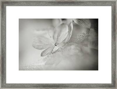 Framed Print featuring the photograph Selection by Michelle Wermuth