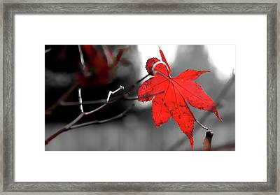 Framed Print featuring the photograph Selective Red Maple Leaf by Jerry Sodorff
