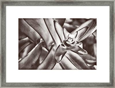 Framed Print featuring the photograph Sensual Succulent I by Leda Robertson
