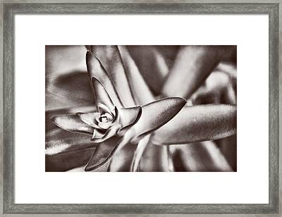 Framed Print featuring the photograph Sensual Succulent II by Leda Robertson