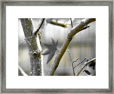 Framed Print featuring the photograph Serene Fall by Jerry Sodorff