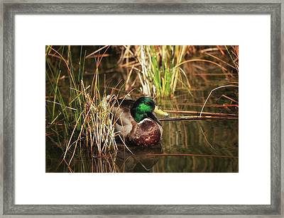 Framed Print featuring the photograph Serene by Rick Furmanek