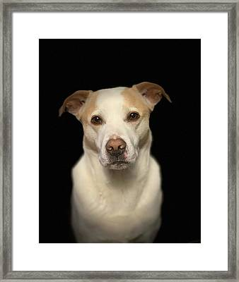 Seriously Snofie Studio Shot Framed Print