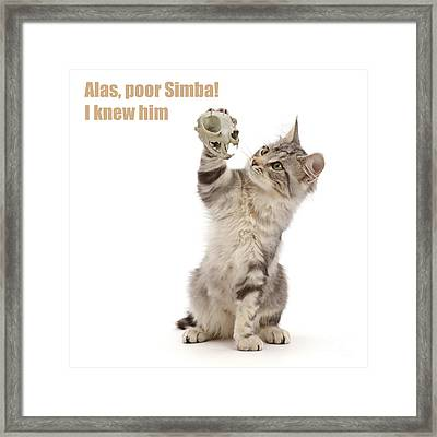 Framed Print featuring the photograph Shakespeare Cat - Alas Poor Yorick by Warren Photographic