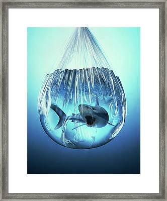 Shark In A Bag Framed Print by Ray Massey