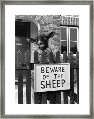 Sheep Guard Framed Print by Cole